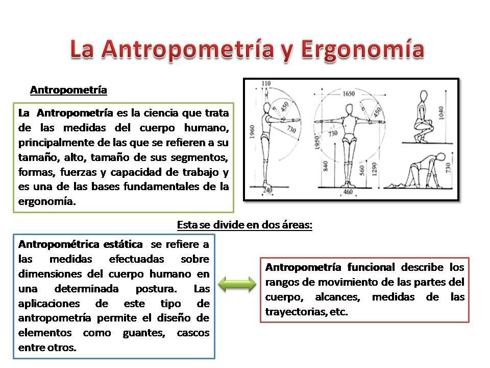 La antropometr a y ergonomia capacitaci n en ergonom a for Antropometria y ergonomia