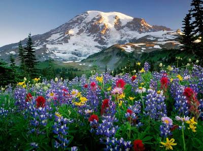 flores al-oleo