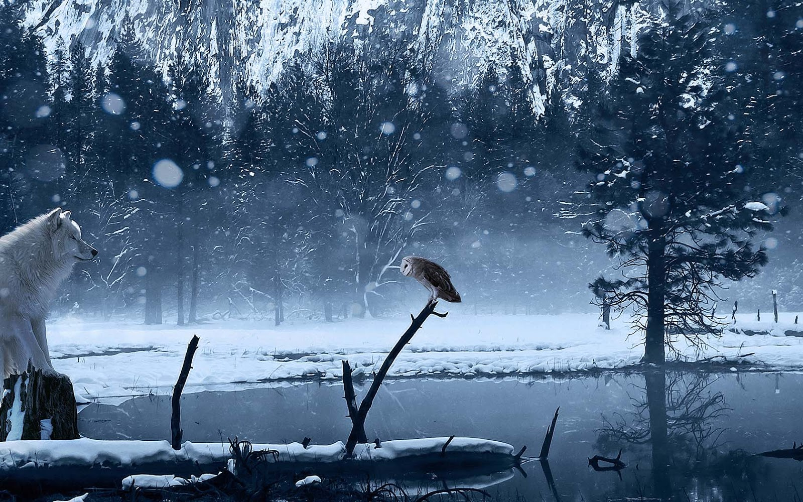 http://3.bp.blogspot.com/-xBdUkMLy5_4/UJwISNMDheI/AAAAAAAAItA/q8znsHETqLs/s1600/winter-wallpaper-met-een-wolf-en-een-uil.jpg