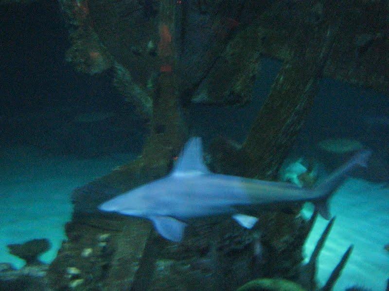 Family Fun In Las Vegas Part 3 Mandalay Bay Shark Reef
