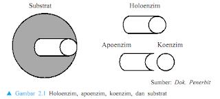 struktur non protein enzim