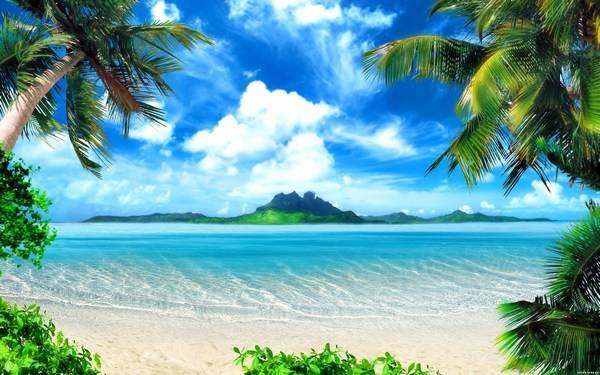 Beautiful Scenery Sea Side Pictures Palm Trees