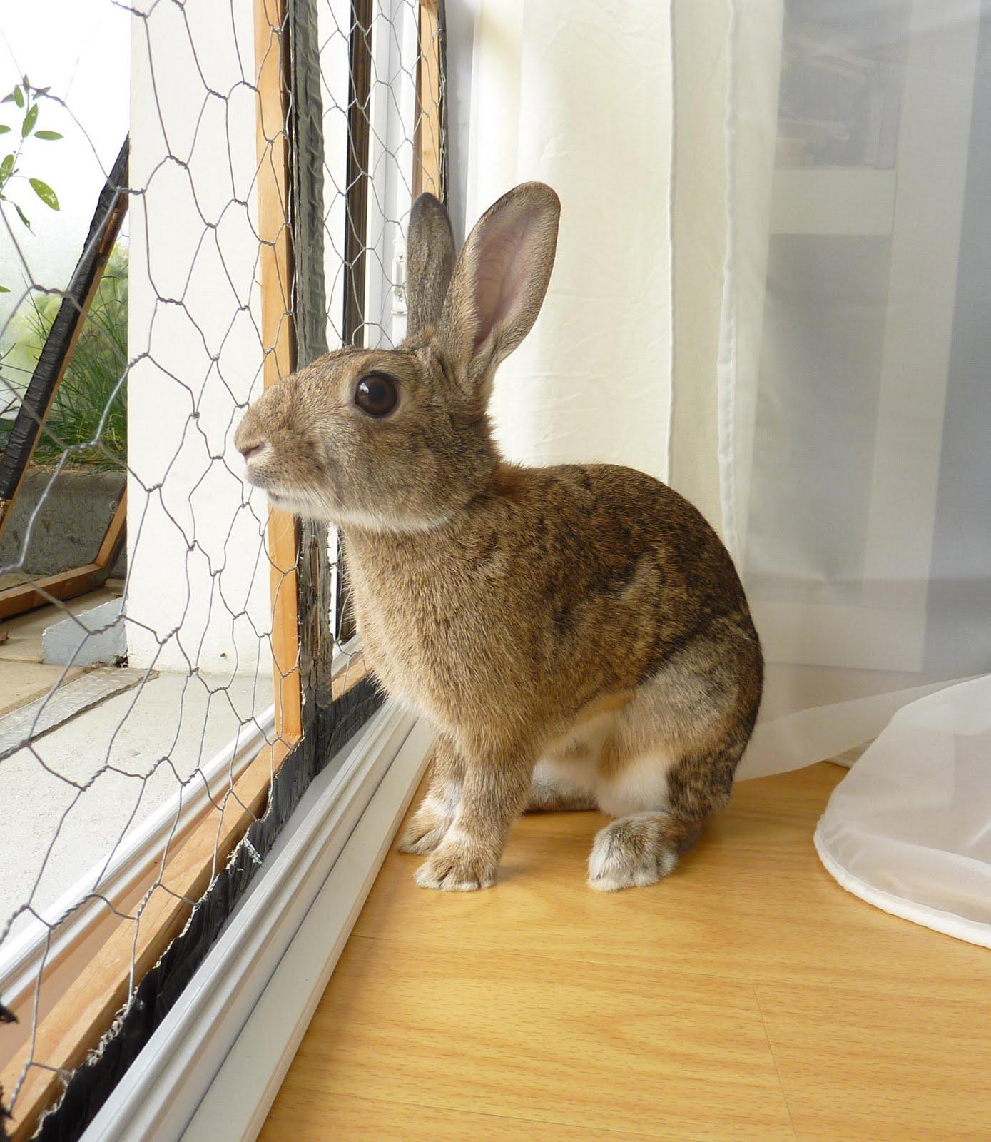 Un garenne sur le sofa un travail de longue haleine - Cuisiner un lapin de garenne ...