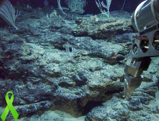 carbon oceanico