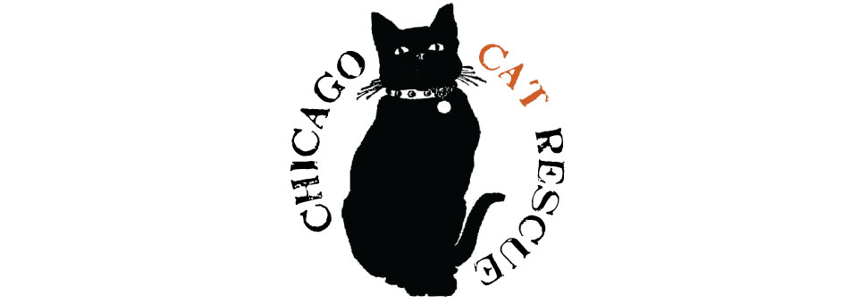 CHICAGO CAT RESCUE SEXY BLACK CAT EVENT