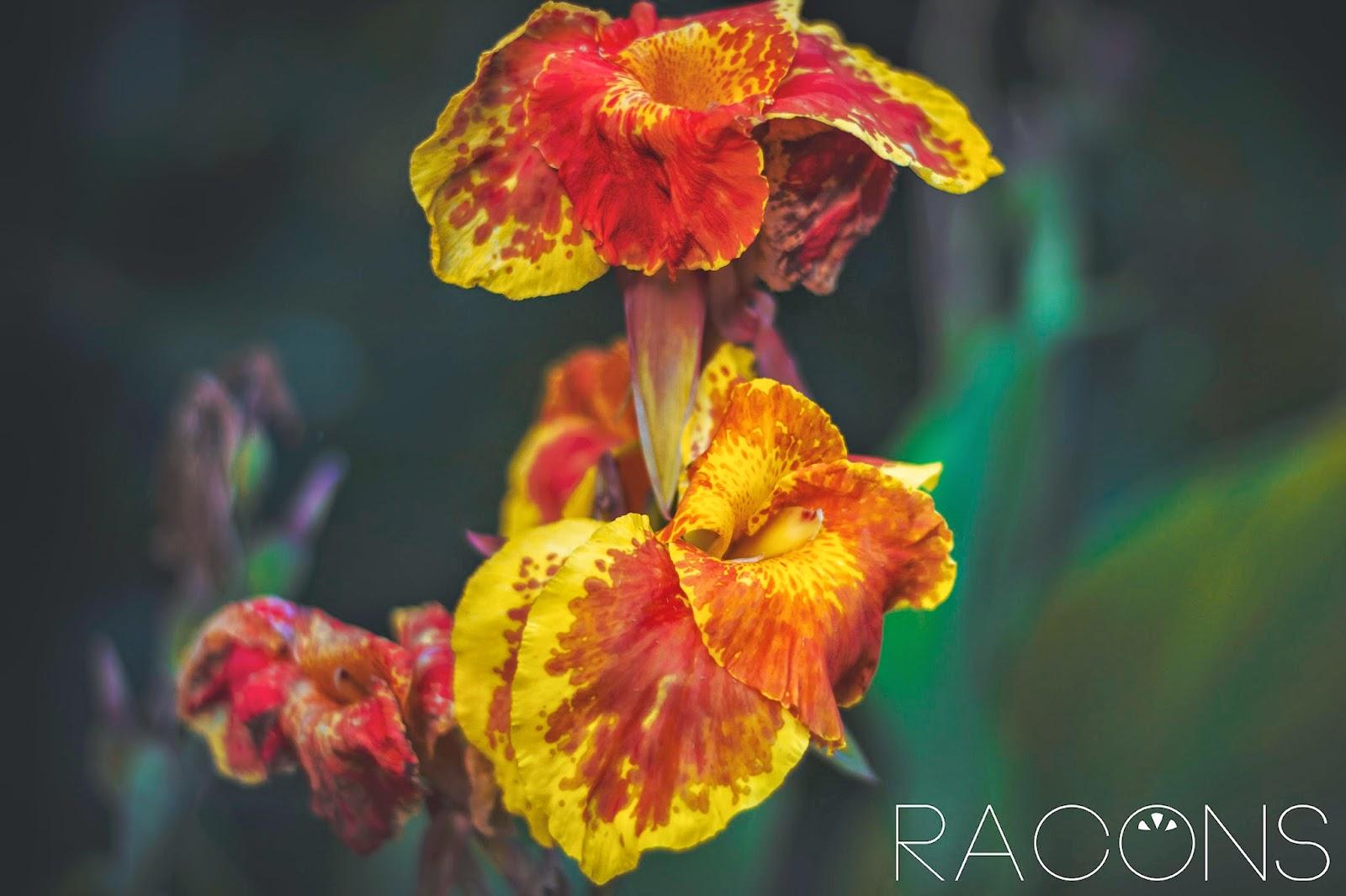 flors jardins de la devesa girona