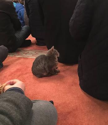 foto kucing di dalam masjid 02