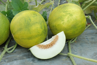 Melon 'Melemon'
