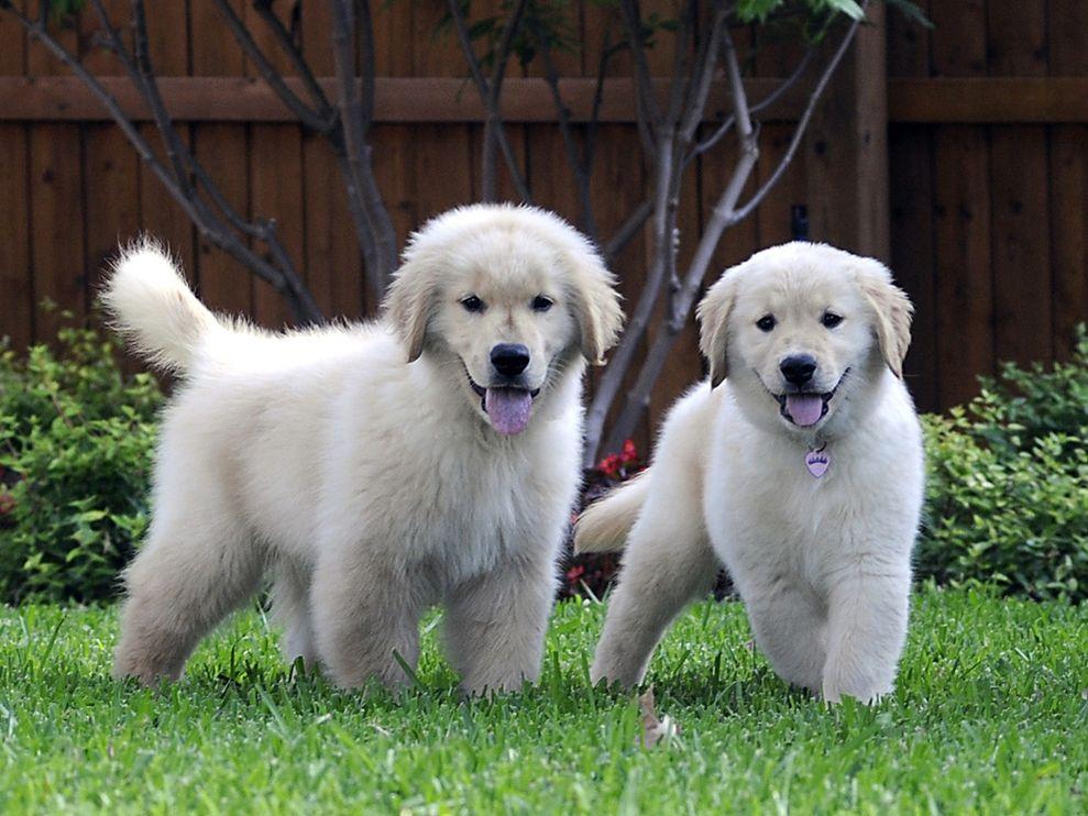 Cute&Cool Pets 4U:...