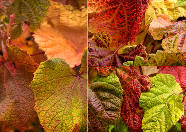 Close up photography of autumn leaves by Martyn Ferry Photography