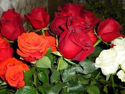 ecuador-roses-red