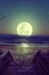 """""""Existem dois tipos de amor: aquele que é só marola e aquele que é o Mar."""""""