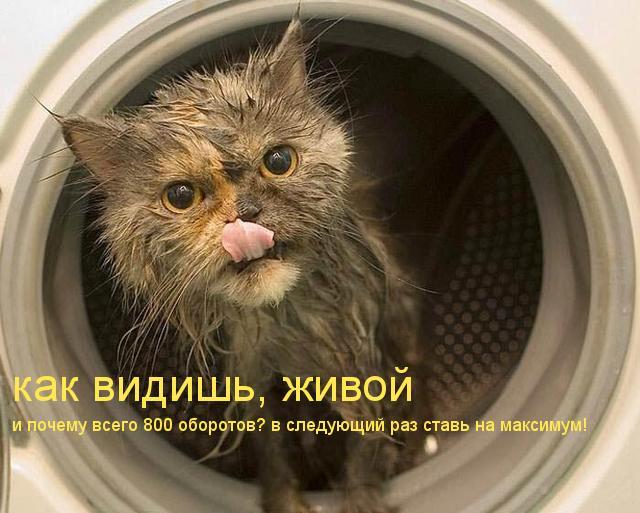 Редискин, спасибо, что живой - кот в стиральной машине