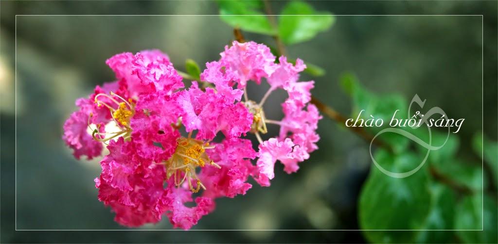Hình Ảnh chào buổi sáng chào ngày mới với thiên nhiên hoa lá