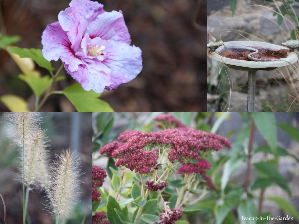 Teacup in the garden herbst garten - Herbst garten ...