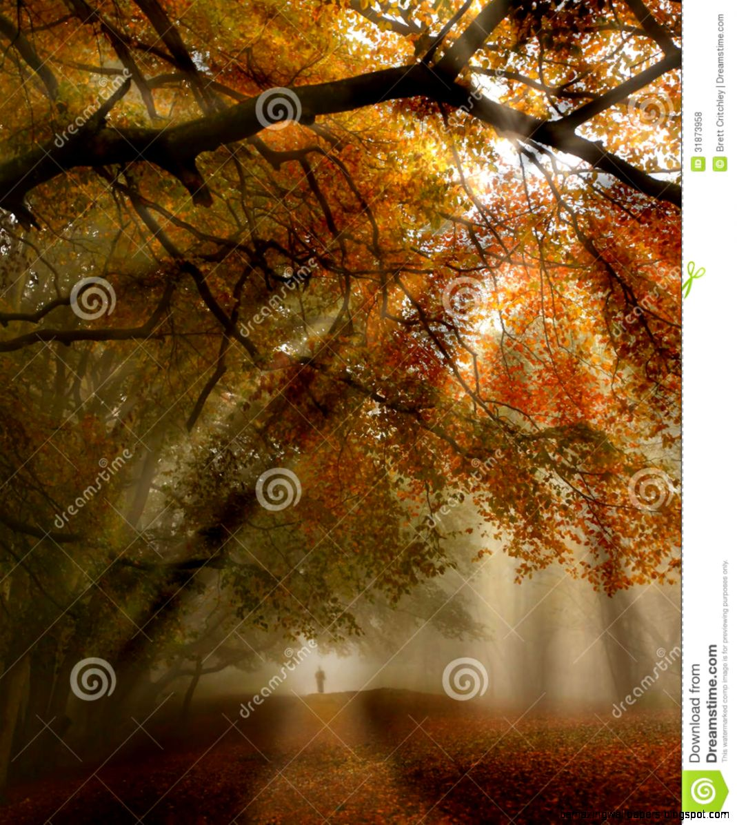 Fall Forest Path Royalty Free Stock Photos   Image 31873958