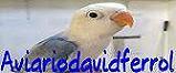 Aviario David