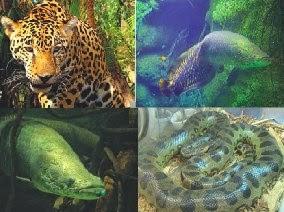 Jenis Hewan Yang ada Di Hutan Amazon