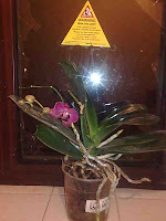 orchid, smashed window and travel sign