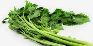 Seledri Pelengkap Sayur yang dapat Menjadi Obat
