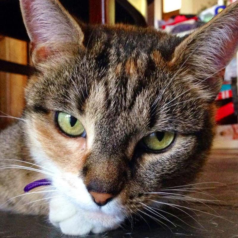 Cat belonging to Mia Cobb, canine scientist & anthrozoologist