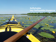 Kayaking the Tay River canal and marsh, Perth, Ontario, Canada with a few . (baffinpaddler say hello to my little friends lily pads yellow flowers tay river marsh boreal baffin sea kayak greenland paddle perth ontario canada)