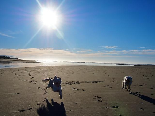 Devastated Christchurch and Waikuku Beach New Zealand ... Wailuku Beach