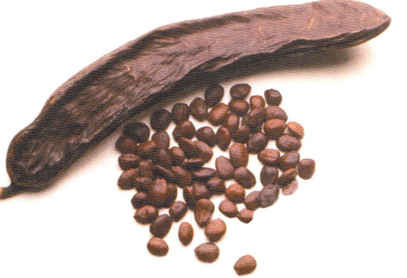 how to grow carob tree from seed
