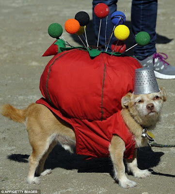 How to dress your dog for Halloween