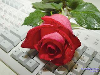 Rosa vermelha sobre teclado de computador