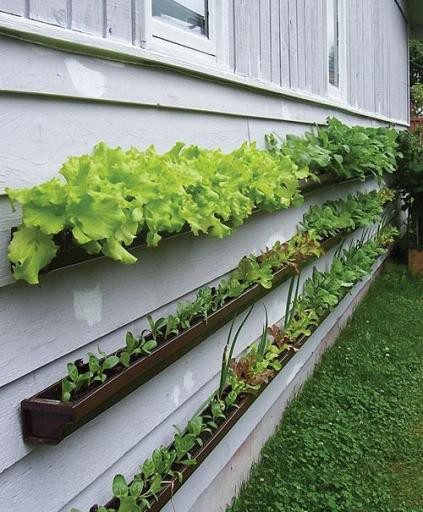 -+garden+steps+-+garden+decor+-+gutter+planters+DIY+via+pinterest.jpg
