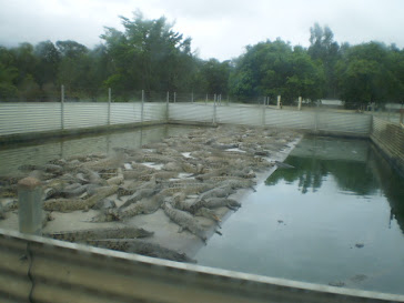 Crocodile Farm in Cairns