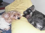 Nanny e Lillo