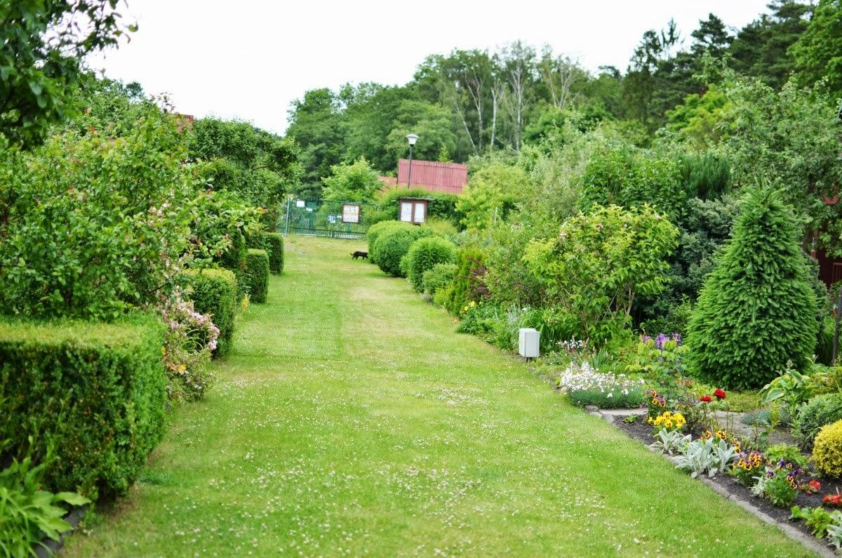 ogród działka