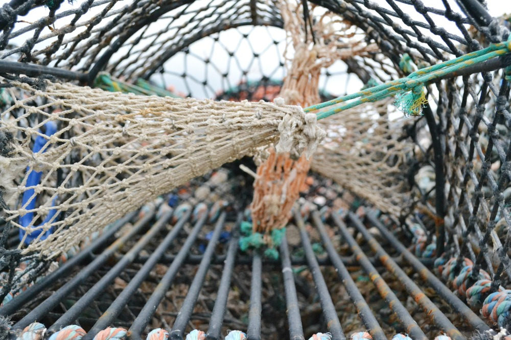 fishing cage net orkney