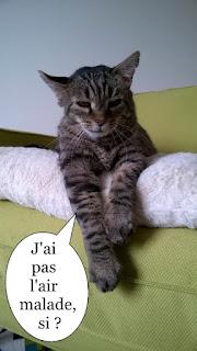 Minou ayant le sida du chat.