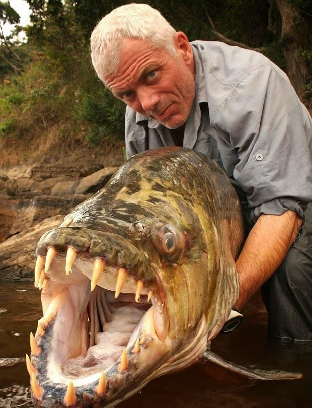 Peixe-tigre