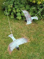 Flying Birds From £50