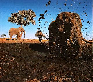 Слон, разбрызгивающий грязь