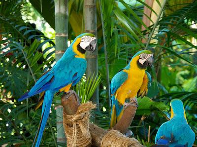 Vườn chim Jurong