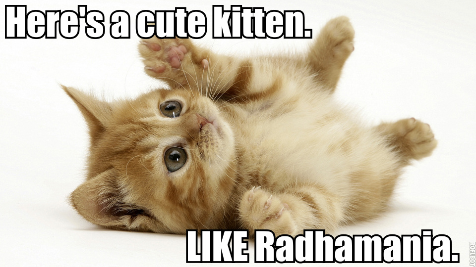 A picture of a cute kitten. LIKE Radhamania.