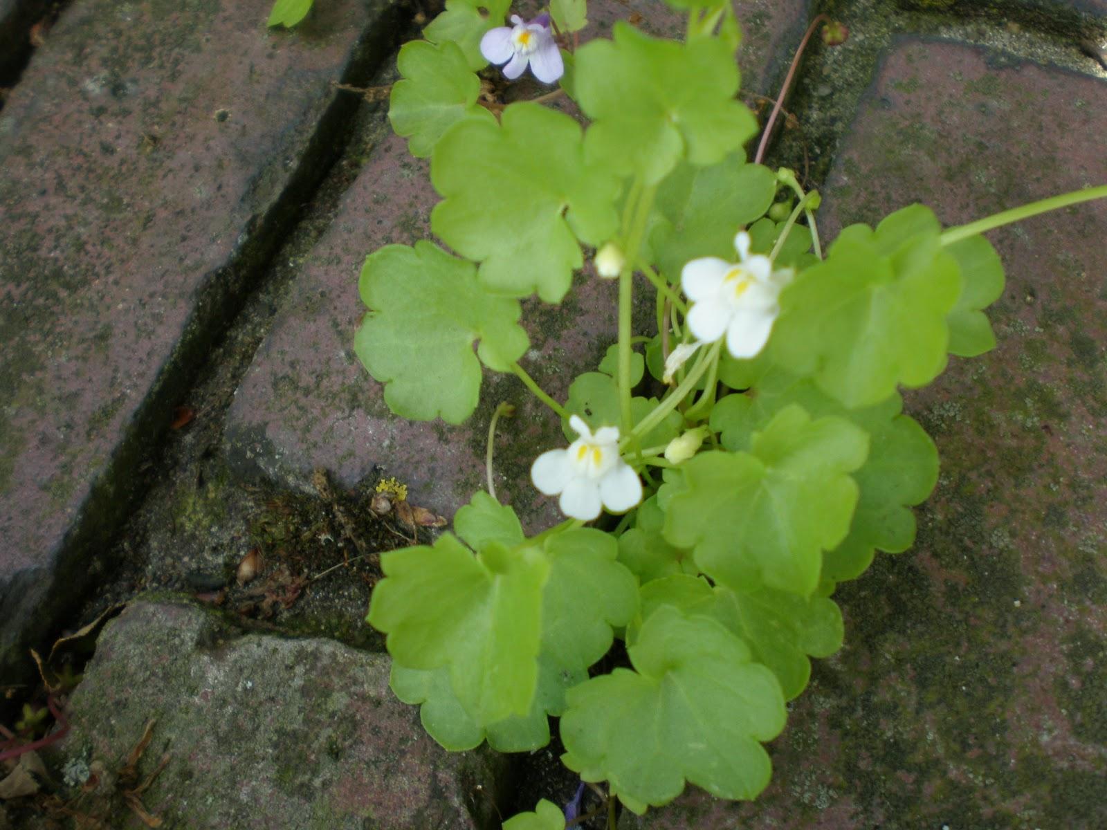 hooikoorts wat bloeit er nu