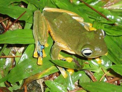 Video Tingkah Laku Hewan yang Lucu dan Aneh (katak vs i
