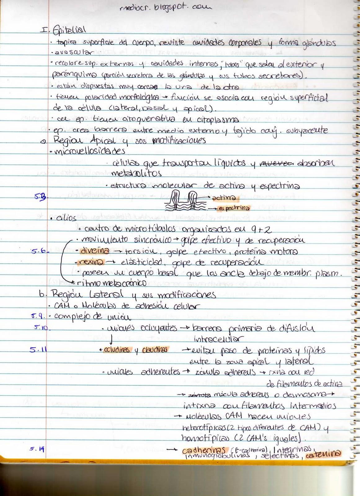 Diagrama Histología: Tejido Conjuntivo Resumen Histología: Tejido ...