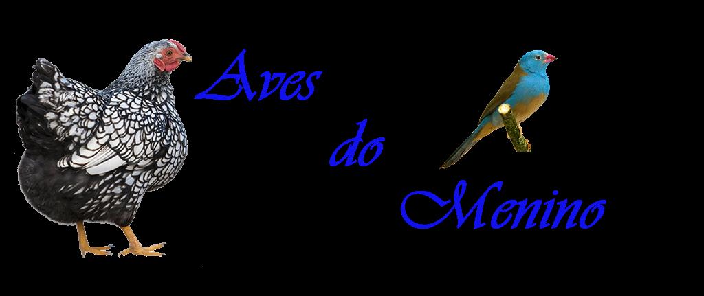 Aves do Menino