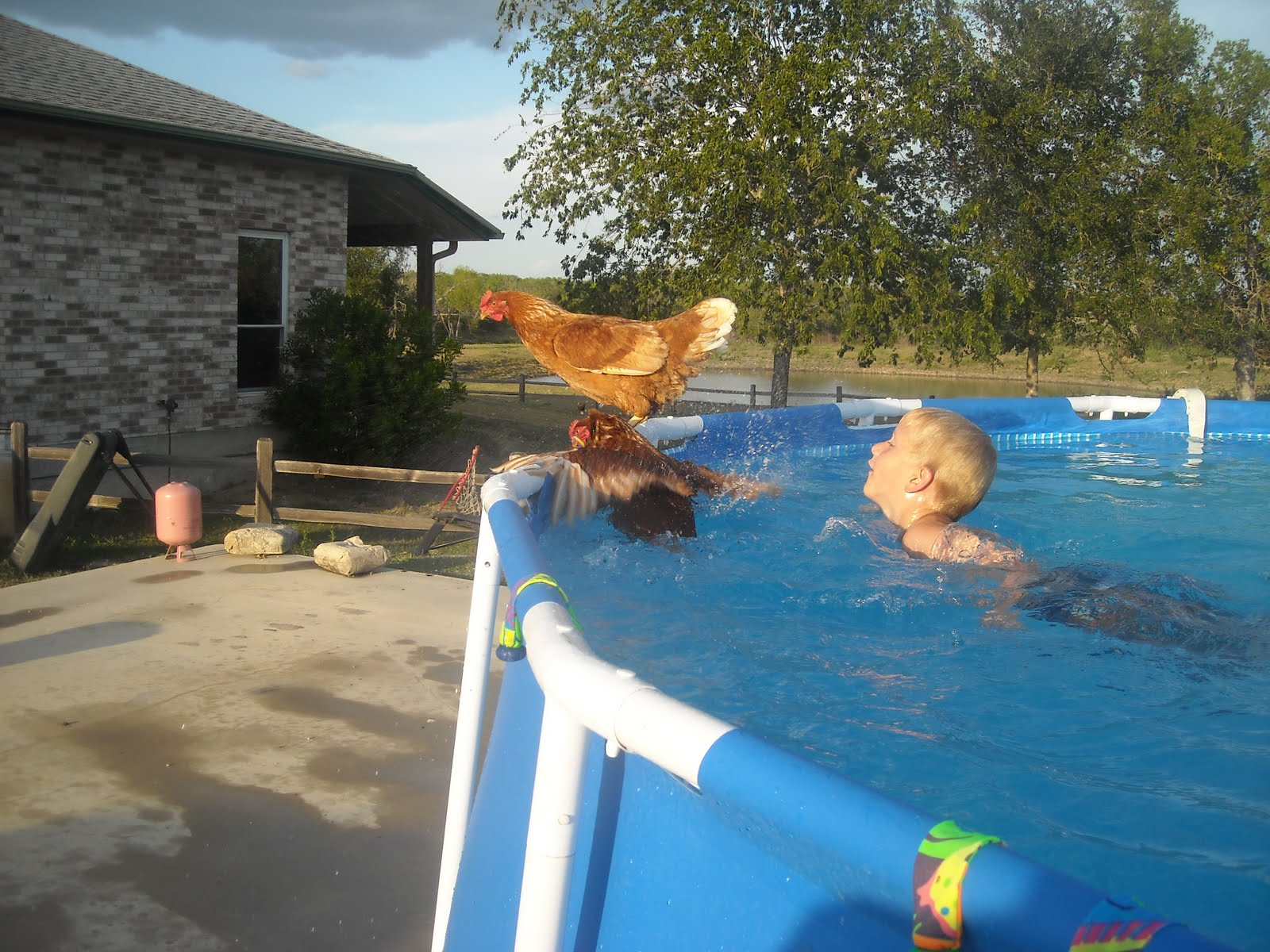 You more organized swimming chicken for Swimming chicken