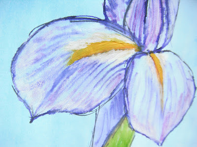 Iris illustration detail