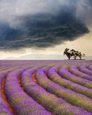 Provence (Francia)