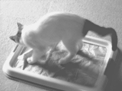 猫のトイレ掃除