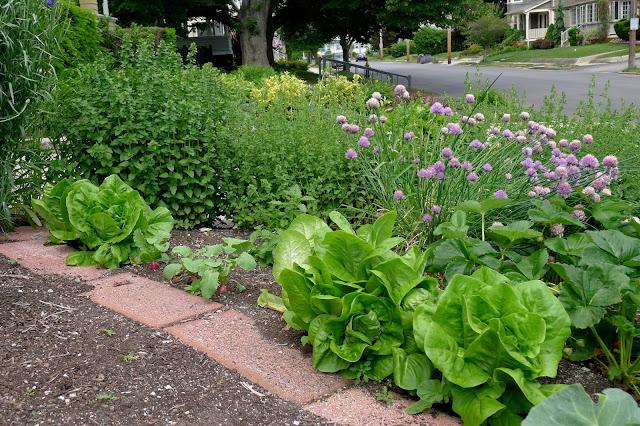 Less Noise, More Green edible landscape, June 10, 2015